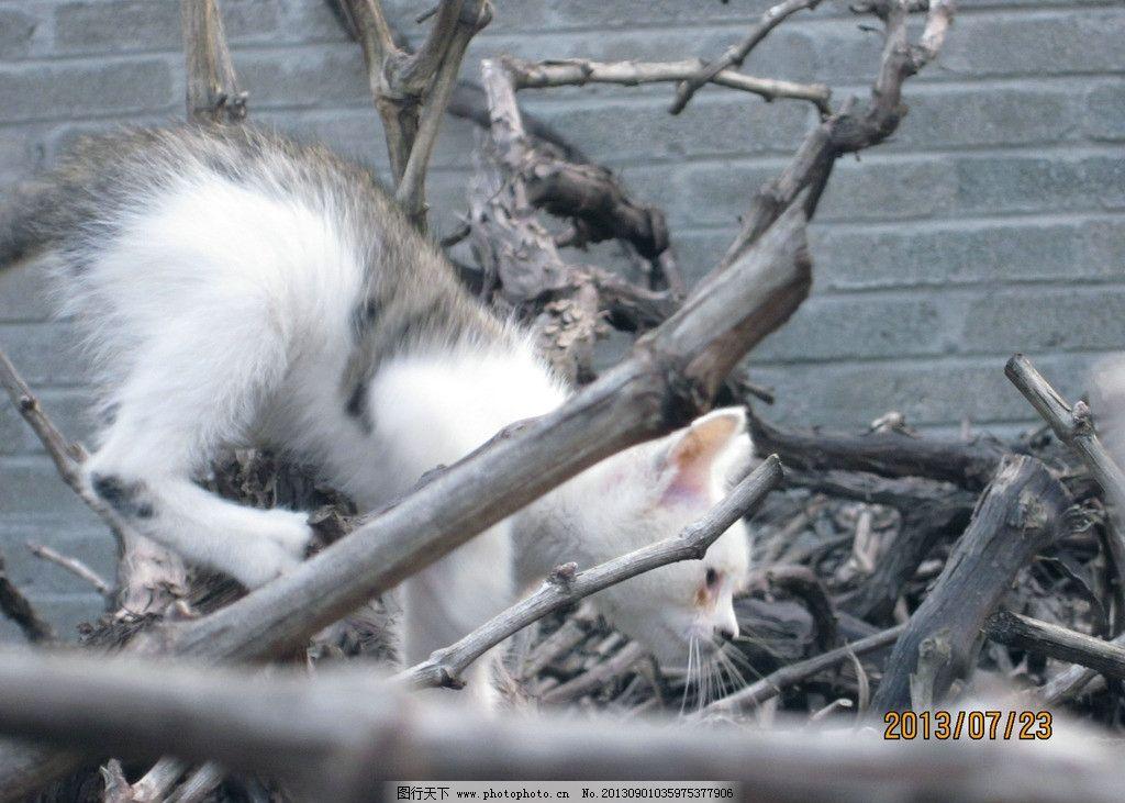 动物 猫眯 小猫 小猫眯 小动物 树枝 摄影