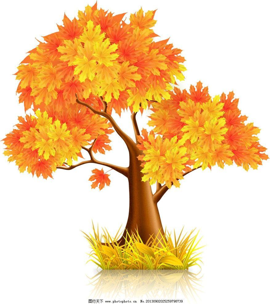 枫叶树 枫叶 枫叶背景 秋天 树木 秋季 树叶 落叶 收获季节 树叶背景