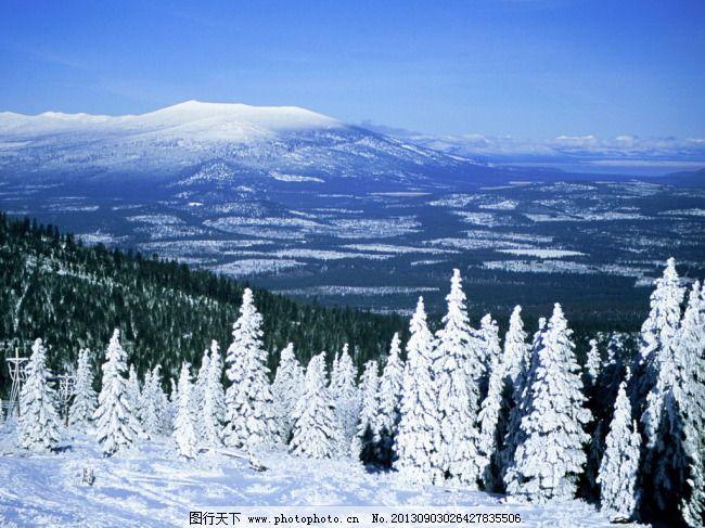 冬天的树林免费下载 松树 雪 雪 松树 树挂 图片素材 风景|生活|旅游