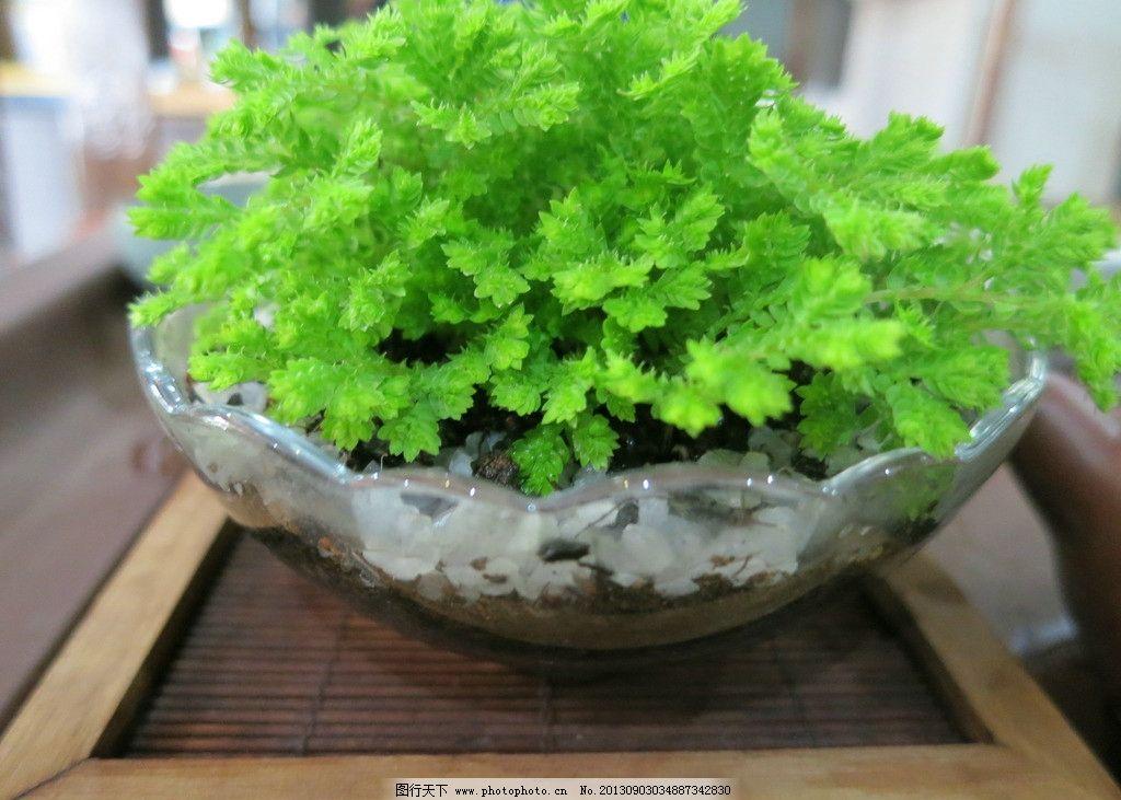 绿色植物 绿色 植物 花 盆栽 盆景 自然风景 自然景观 摄影 180dpi jp