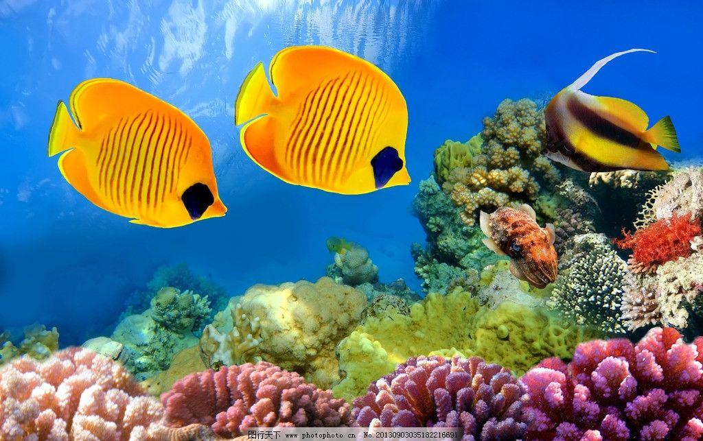 珊瑚礁 海洋生物 大海 海洋 海底 水母 海鱼 鱼儿 海底鱼 小鱼 水族