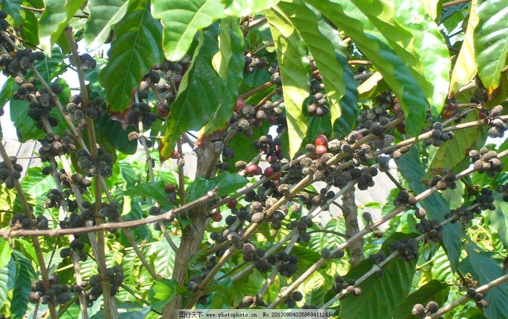 海南植物图片