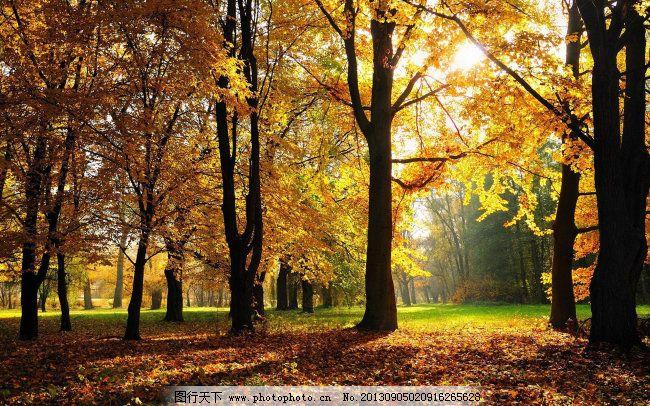 秋天树林风景图_背景图片_底纹边框_图行天下图库