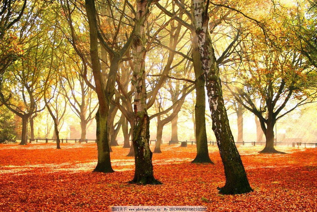 公园 森林 树木 秋天 杨树 梧桐 红色树叶 国内旅游 旅游摄影