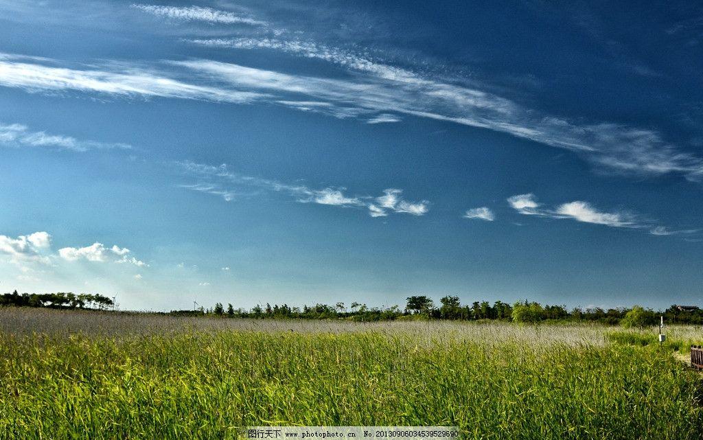 崇明岛湿地风光图片