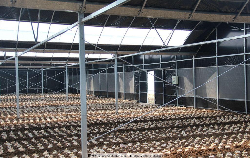 蔬菜大棚 蔬菜 种植 大棚 农业 植物 农业生产 现代科技 摄影 72dpi j