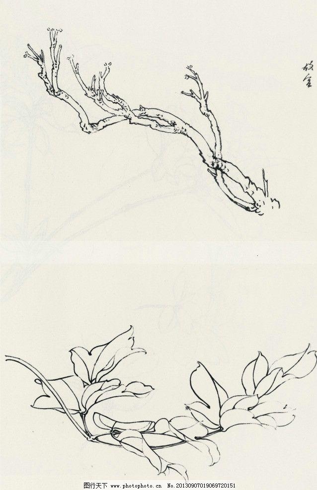 铅笔画牡丹分解步骤