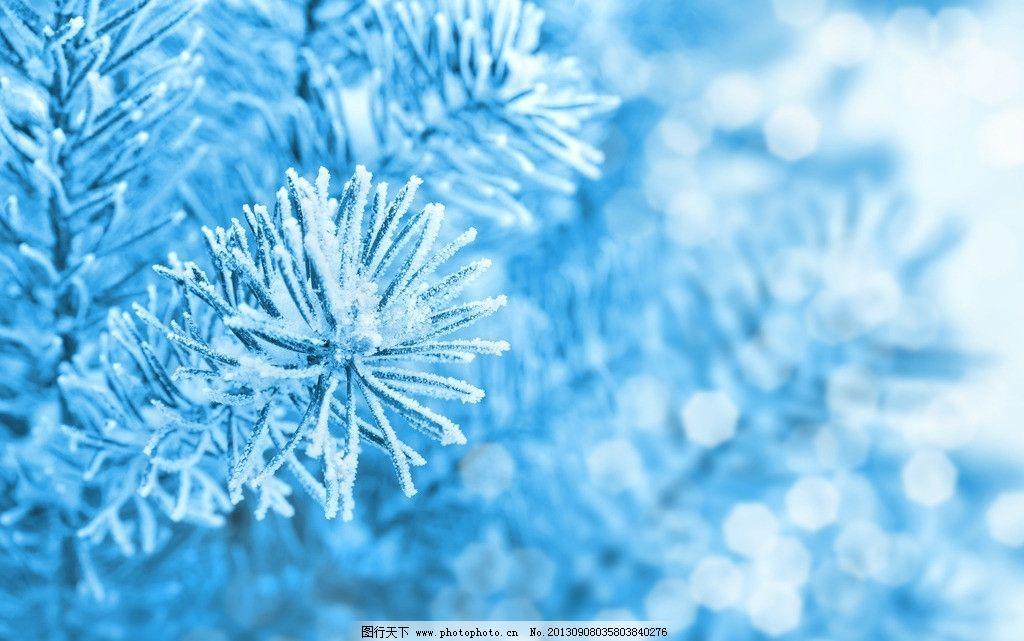 松树枝 雾凇 冬天 冰雪 冬季 背景 圣诞树 树枝树木树叶绿树 树木树叶