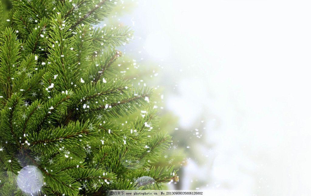 松树枝 冬天 雪花 冬季 背景 梦幻 圣诞树 树枝树木树叶绿树 树木树叶