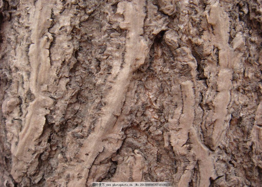 树皮图片,银杏 银杏树干 裂纹 花纹 野生植物 摄影-图