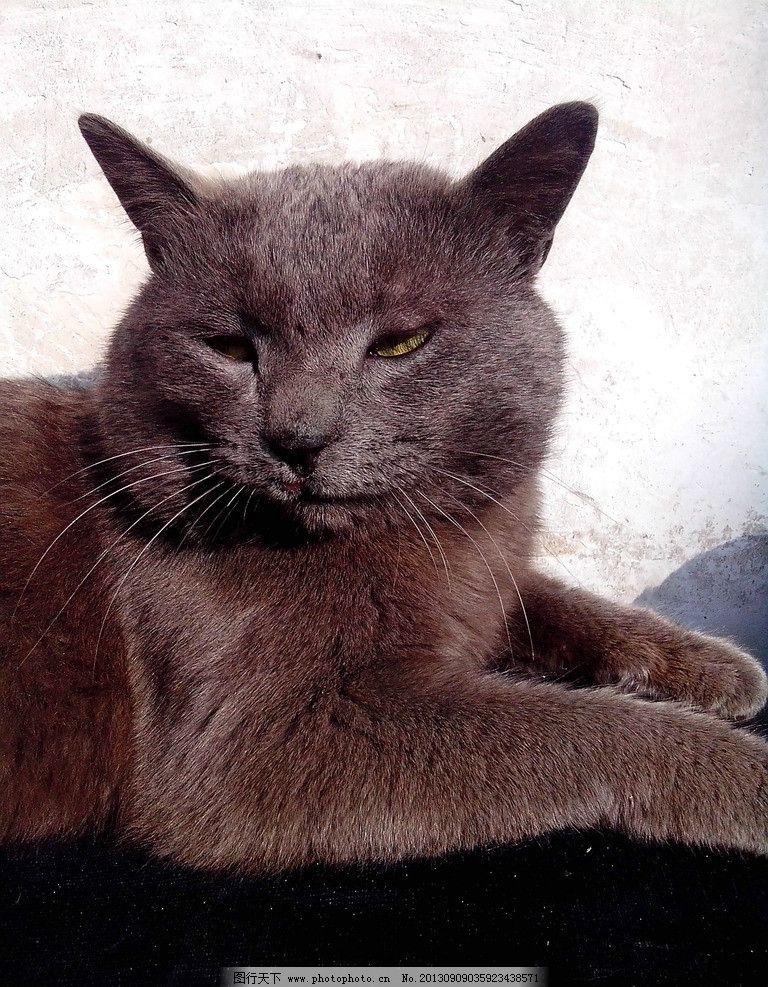 壁纸 动物 猫 猫咪 小猫 桌面 768_987 竖版 竖屏 手机