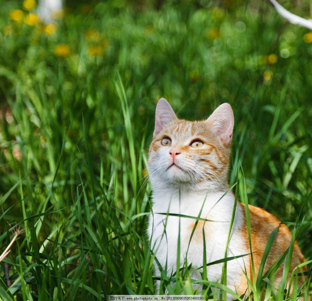 小猫 家猫 猫 动物 家禽 儿科动物 抬头 草丛 绿色 自然 家禽家畜