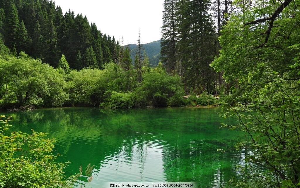 山水 森林 树木 湖泊 清水 绿色 摄影