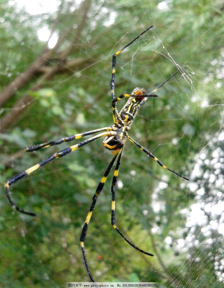 蜘蛛 蜘蛛网 节肢动物 朝阳公园 摄影