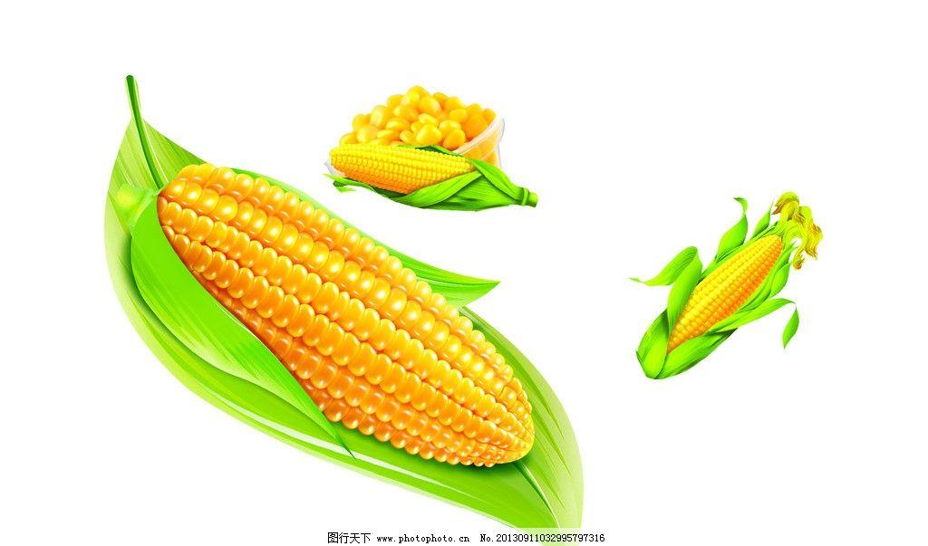 玉米 卡通玉米 玉米素材 玉米叶子 矢量玉米 矢量素材 绿色食品 农