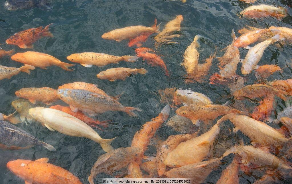 千岛湖鱼图片