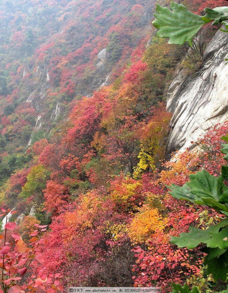 嵩县卧龙谷 红叶 秋景 秋叶 树叶 山谷 自然风景 旅游摄影 摄影 180