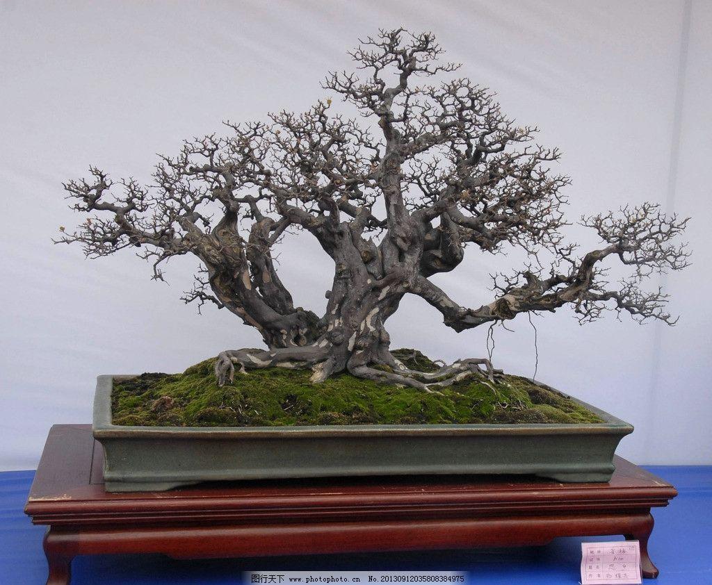 盆景 雀梅 摆件 造景 紫砂盆 树木树叶 生物世界 摄影 300dpi jpg