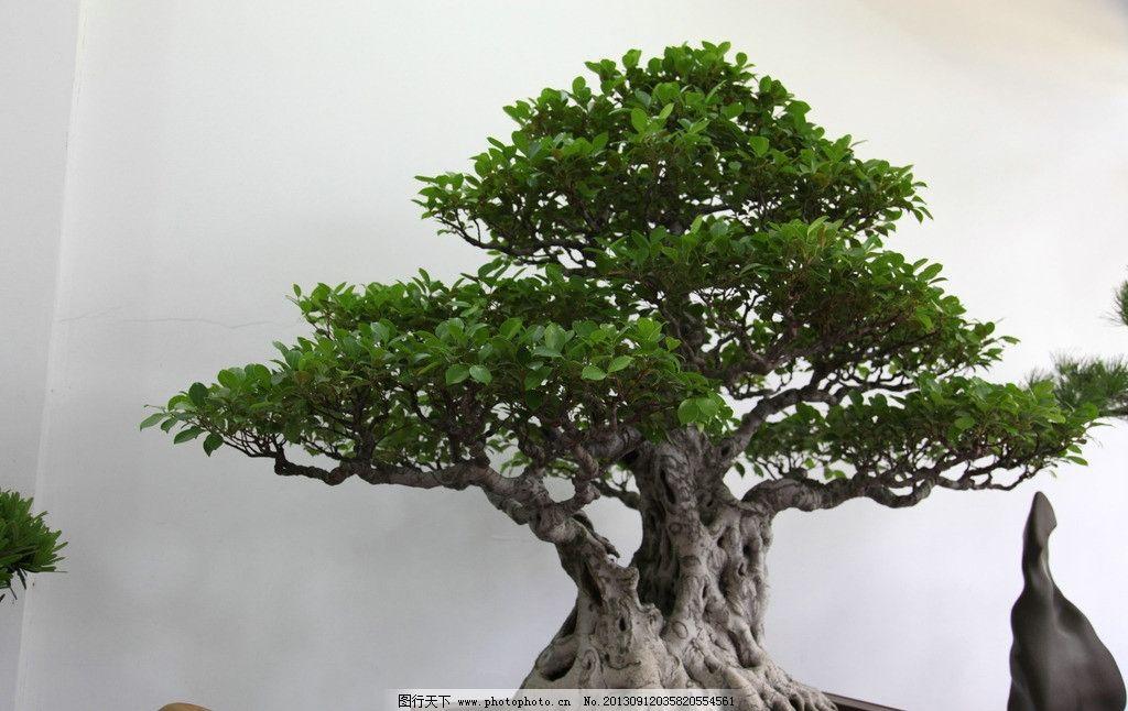 盆景 摆件 造景 紫砂盆 古树 造型 树木树叶 生物世界 摄影 72dpi jpg