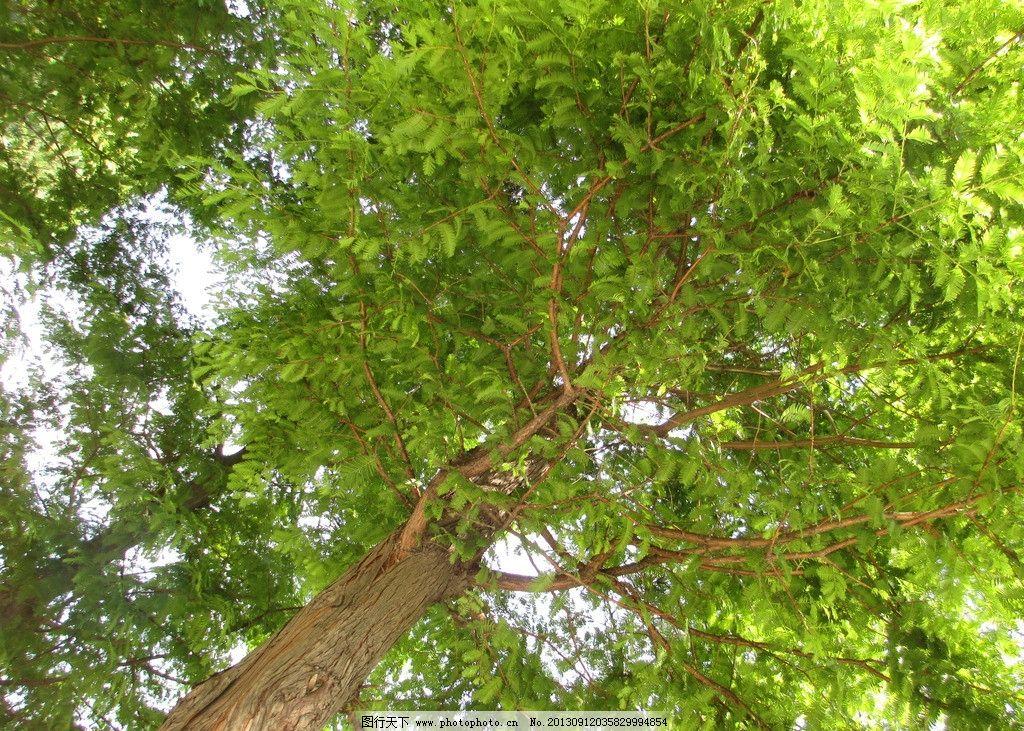 大树 大明湖 公园 树荫 绿色 夏天 树木树叶 生物世界 摄影 180dpi