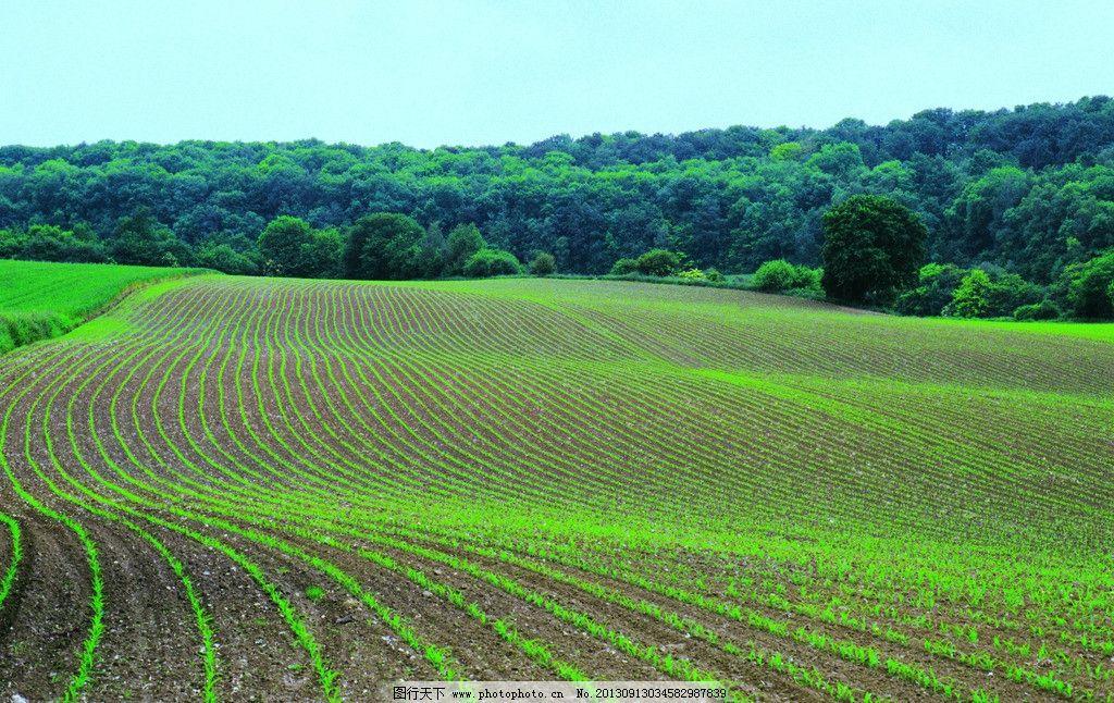 绿色农田 田地 农田 田园 绿植 绿色 摄影 田园风光 自然景观 300dpi