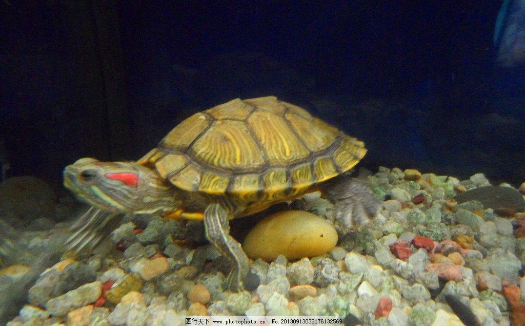 海底乌龟图片