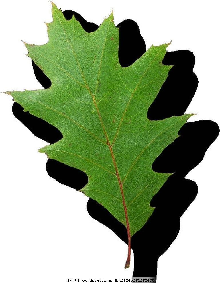 植物 树叶 叶子图片