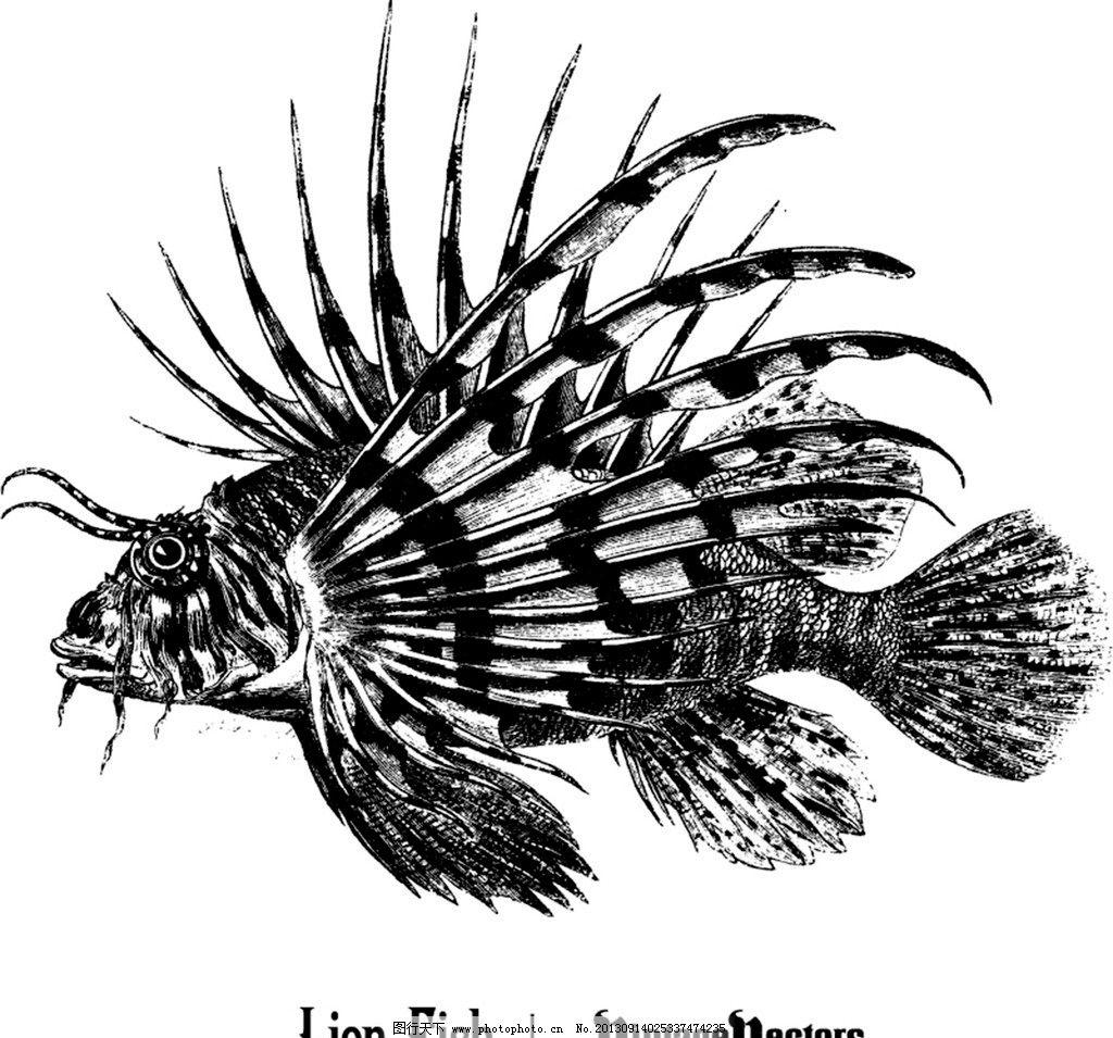 古董狮子鱼 手绘鱼 设计图 矢量图
