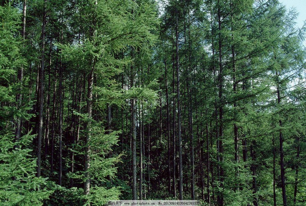 树木景观 树木 树 树林 植被 大树 树群 树木树叶 生物世界 摄影 350