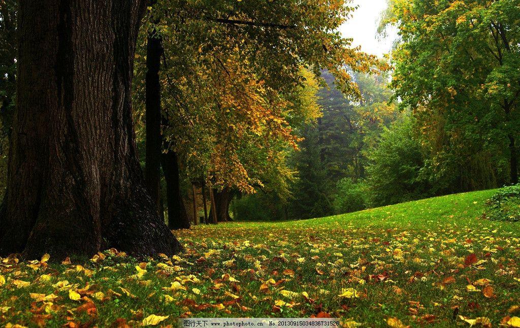 树林秋天美丽风景 树林 草地 树木 落叶 蓝灰色天空 自然风景 自然