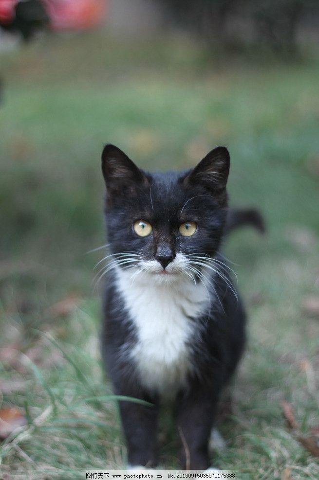 萌猫一只 卖萌 天然呆 动物世界 小清新 摄影