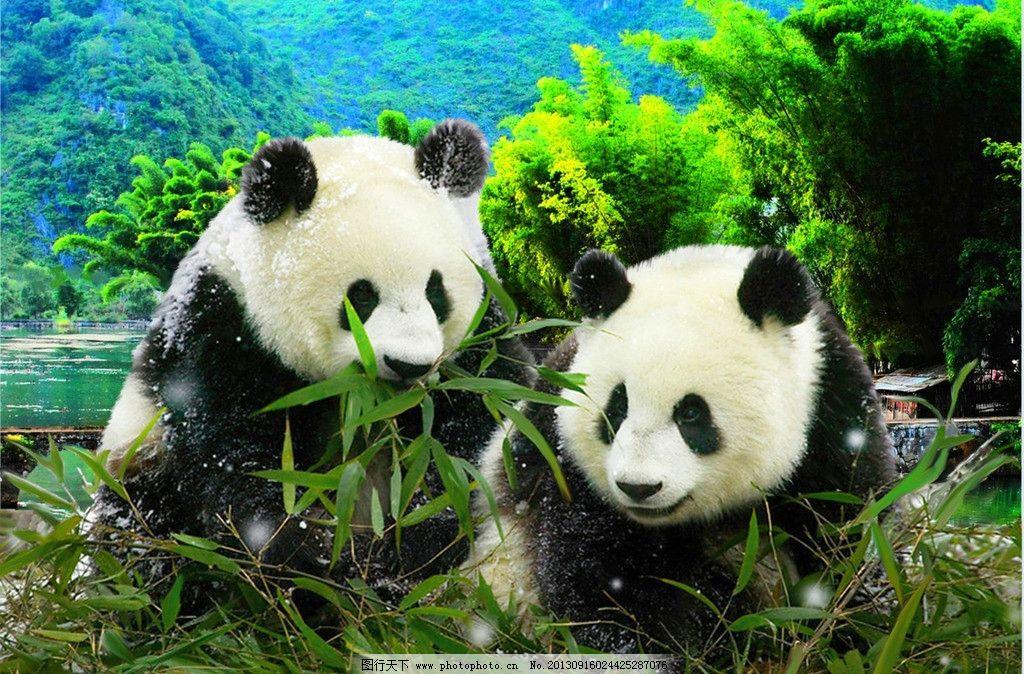 生物世界 熊猫 国宝 竹叶 竹林 村庄 大山 野生动物 设计 300dpi jpg