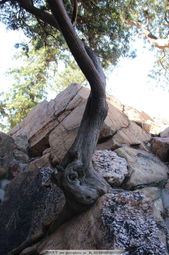 树木 天空 岩石 石头 奇观 假山 颐和园 国内旅游 旅游摄影 摄影 72