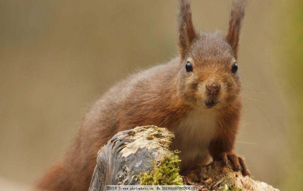 松鼠 萌物 动物 可爱 野生动物 生物世界 摄影