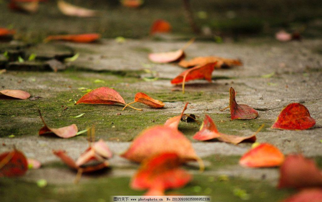 落叶 秋叶 红叶 秋天 树叶 青苔 地面 落叶图片下载 树木树叶 生物