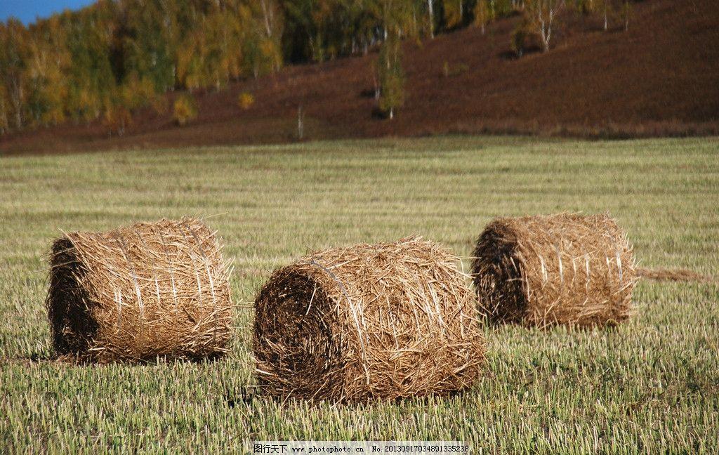 草垛随拍 额尔古纳市 秋天 树林 草地 草垛 丰收 牧民 自然风景 自然