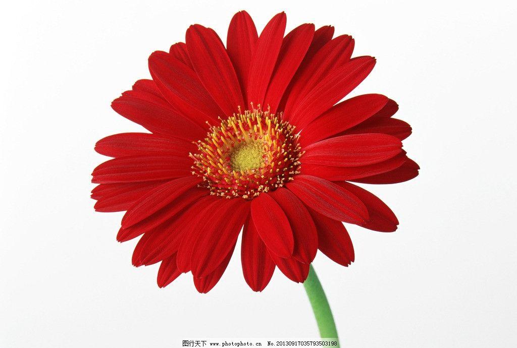 花草 植物 花卉 花朵 太阳花 摄影自然风景花草树木 生物世界