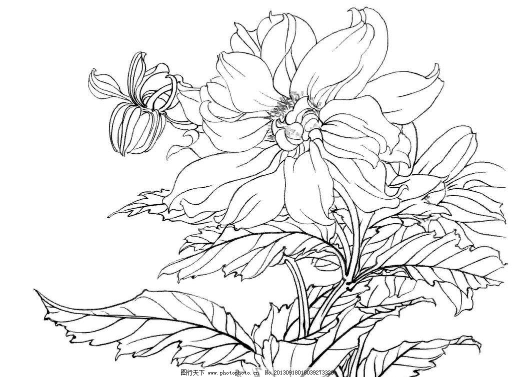 白描花卉 植物 花卉 白描 线描 花草 生物世界 矢量 ai