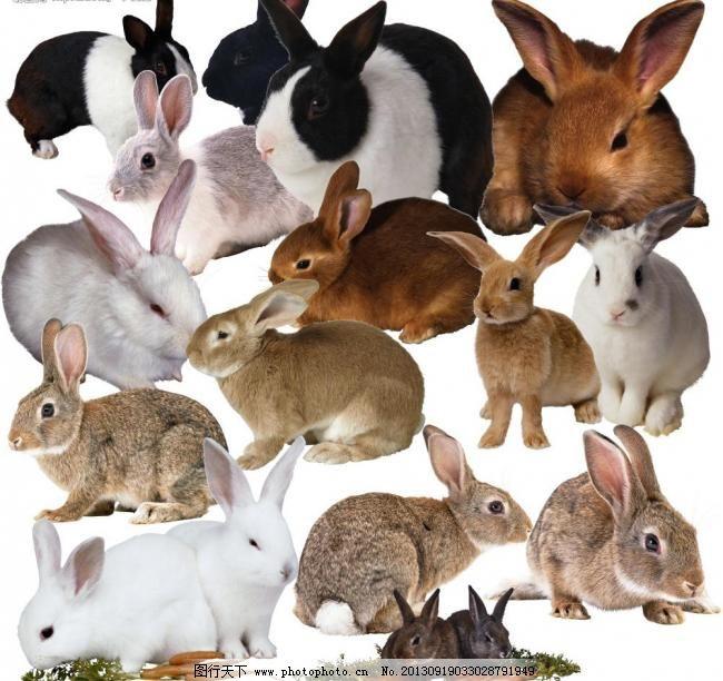 设计图库 动漫卡通 卡通动物  高清晰兔子图片免费下载 300dpi psd