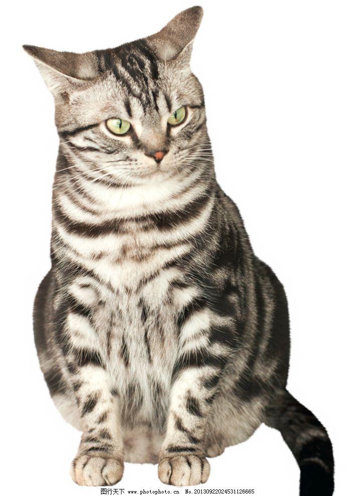 坐着的猫图片