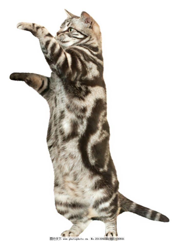 小猫站立画简笔画步骤