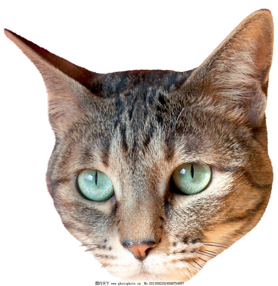 小猫 家禽 可爱动物