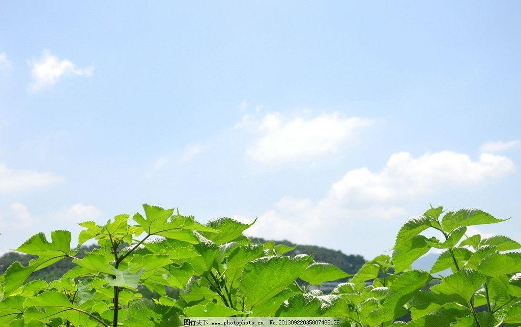 蓝天白云 风景 旅游 蓝天 白云 绿叶 树木树叶 生物世界 摄影 300dpi