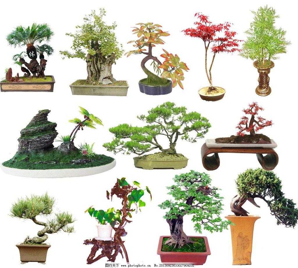盆栽植物装饰 盆栽植物 室内室外植物盆景 金钱竹 马拉巴栗 兰花 绿