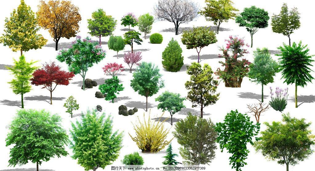 树 彩图 立面