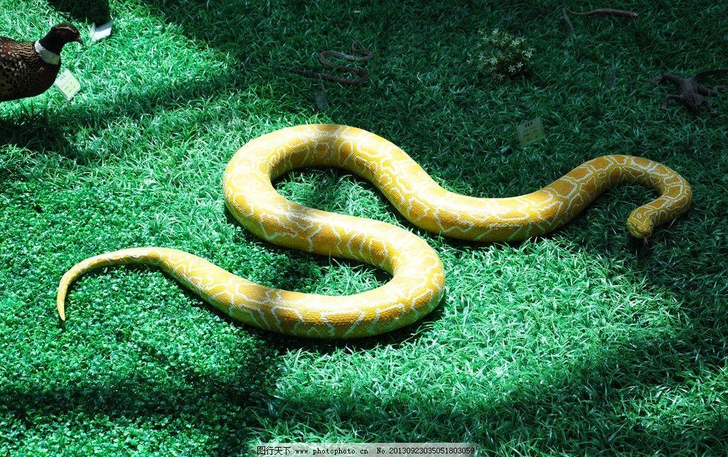 重庆野生动物世界蛇