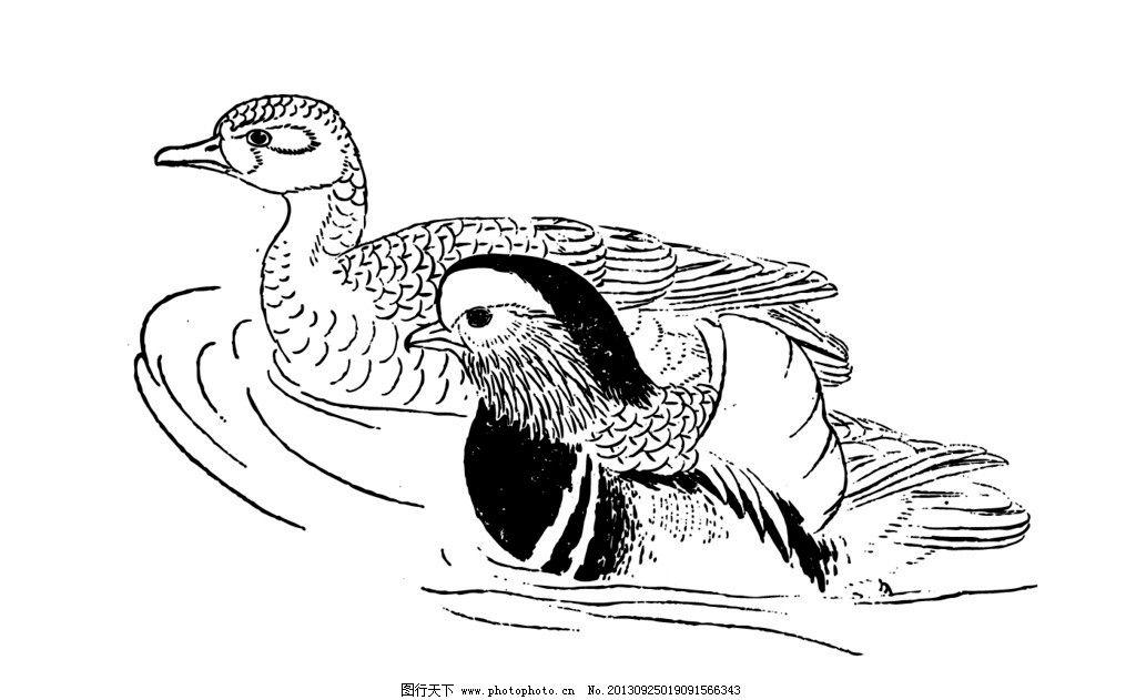 鸳鸯图片,鸟类白描 白描鸟 鸳鸯戏水 工笔鸟 美术-图