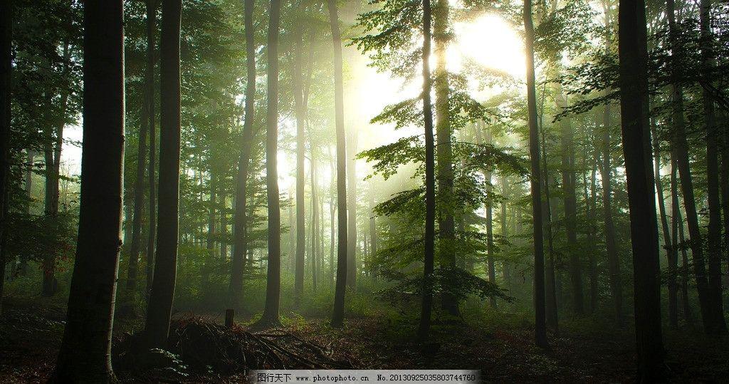 森林 树林 树叶 落叶 绿叶 古树 大树 秋天 春天 黎明 清晨 夏天 背景图片