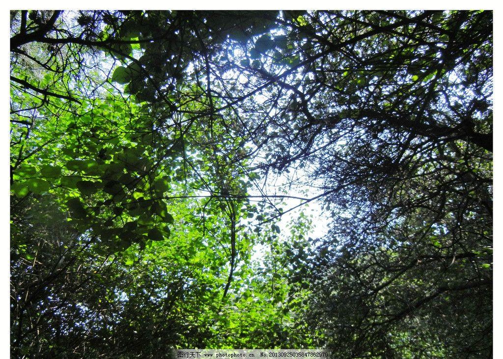 透过树木仰视天空 树 树林 天空 仰视 绿色 叶子 树木树叶 生物世界