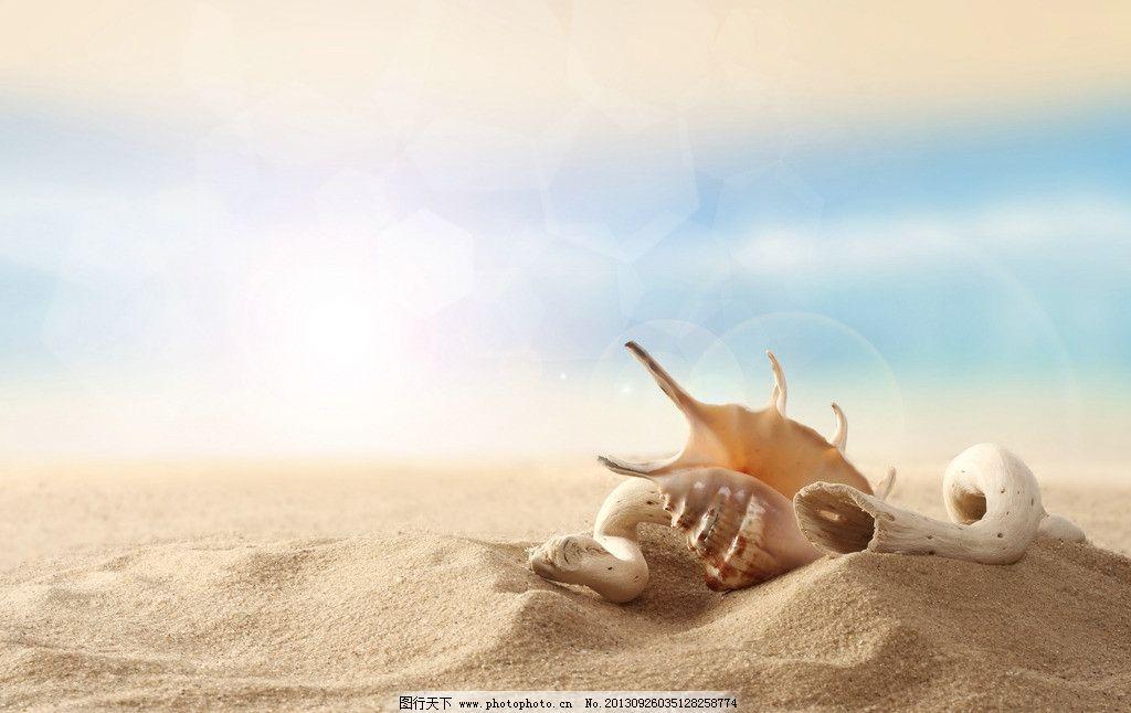 海螺 沙滩 海边 海滩 贝壳 夕阳 海洋生物 生物世界 摄影